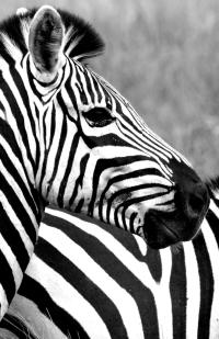 Wildlife_klein-06