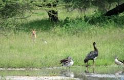 Wildlife_klein-07