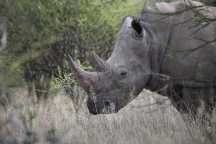 Namibia_1-01