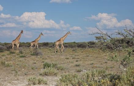 Namibia_1-12