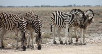 Namibia_1-16
