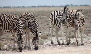 Namibia_1-17