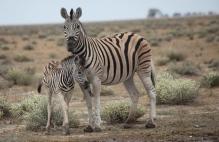 Namibia_1-18